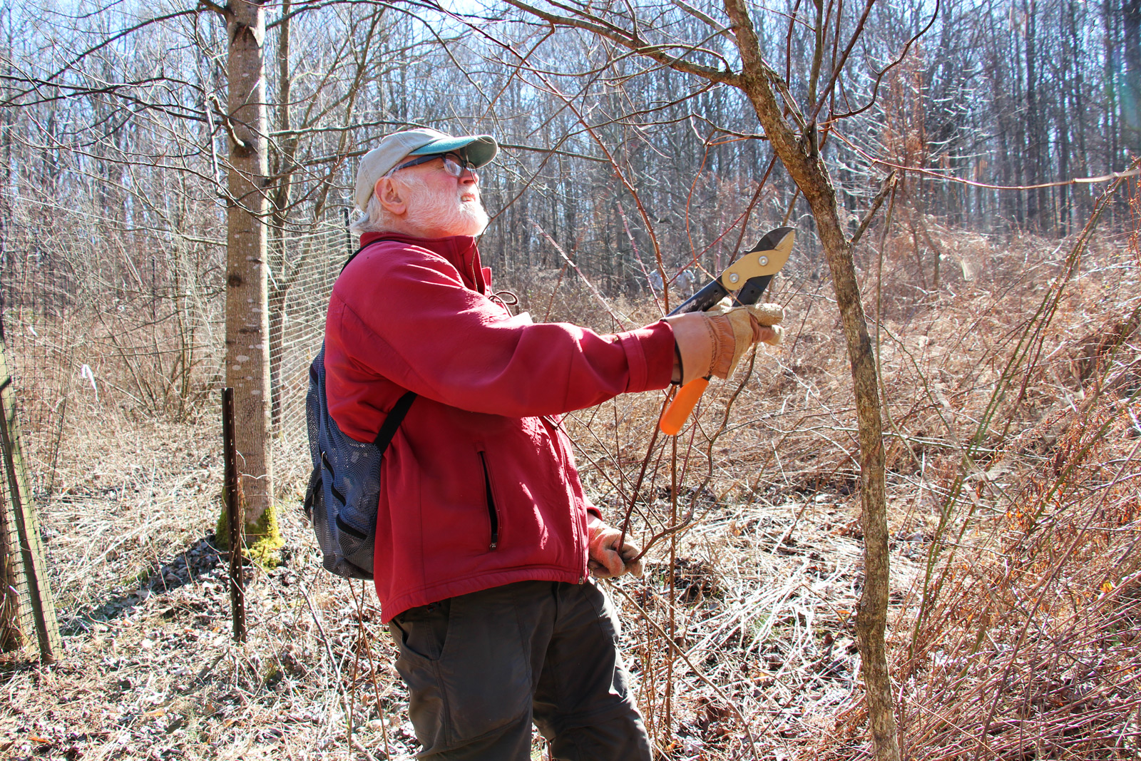 mike-invasive-plant-removal