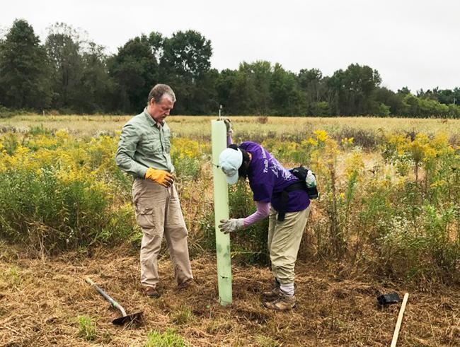 tree-planting-Conservation